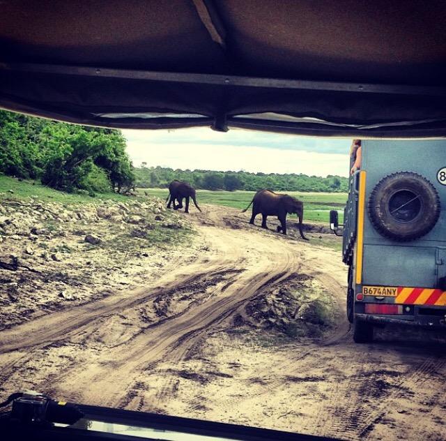 ελέφαντες σε σαφάρι στην Μποτσουάνα