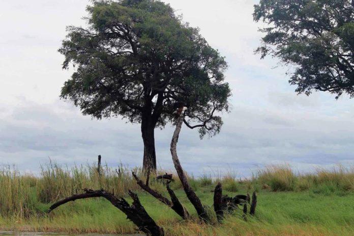 όμορφο τοπίο κάνοντας σαφάρι στην Μποτσουάνα