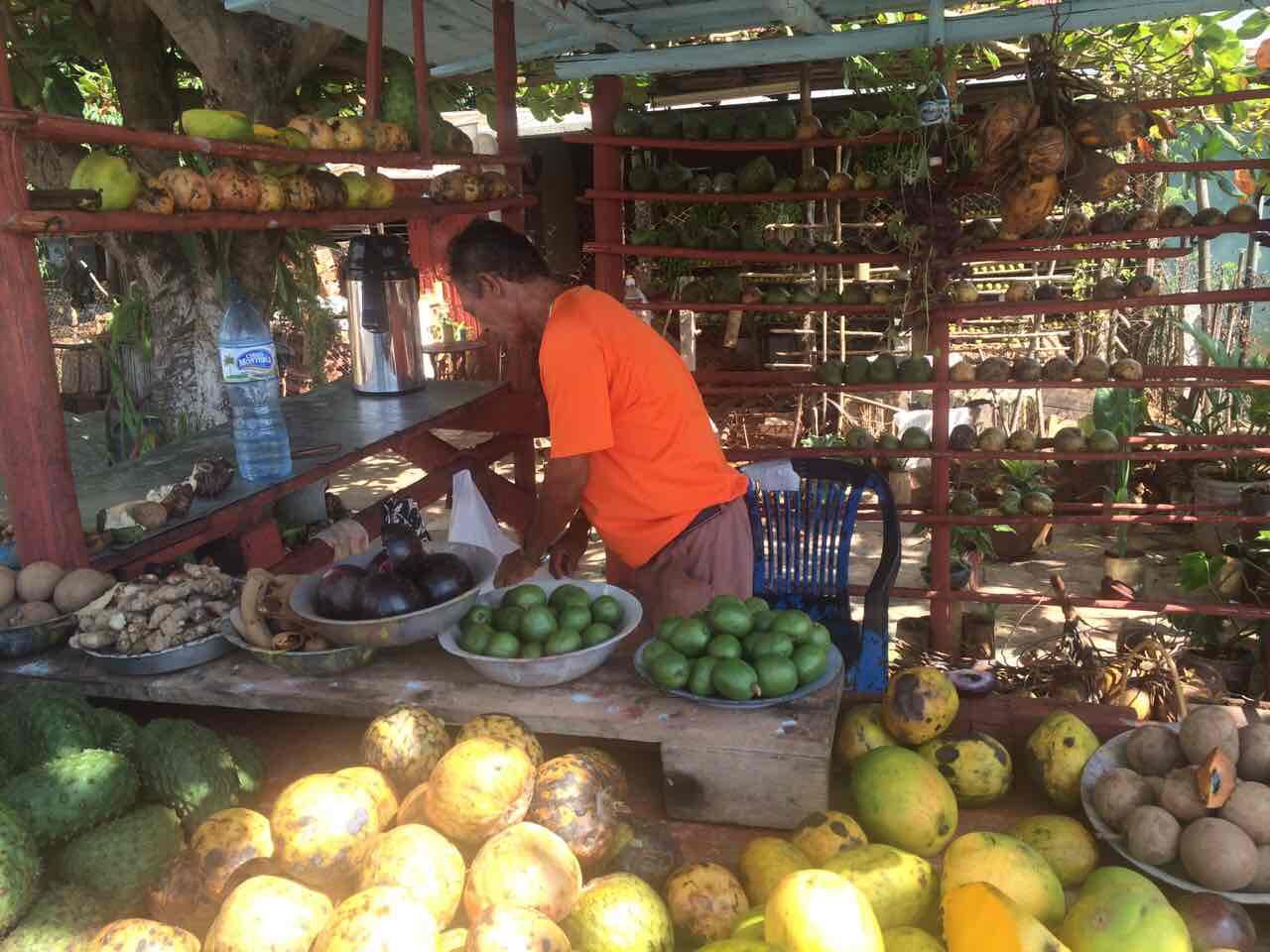 cuba-fruits