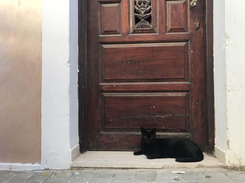 karpathian-cat
